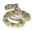 Snake_colour_reconstruction_credit_Jim_Robbins